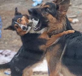 Sid teasing Zoe