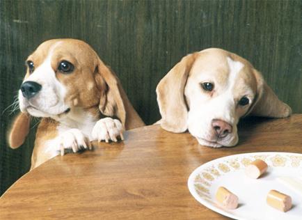 puppies begging