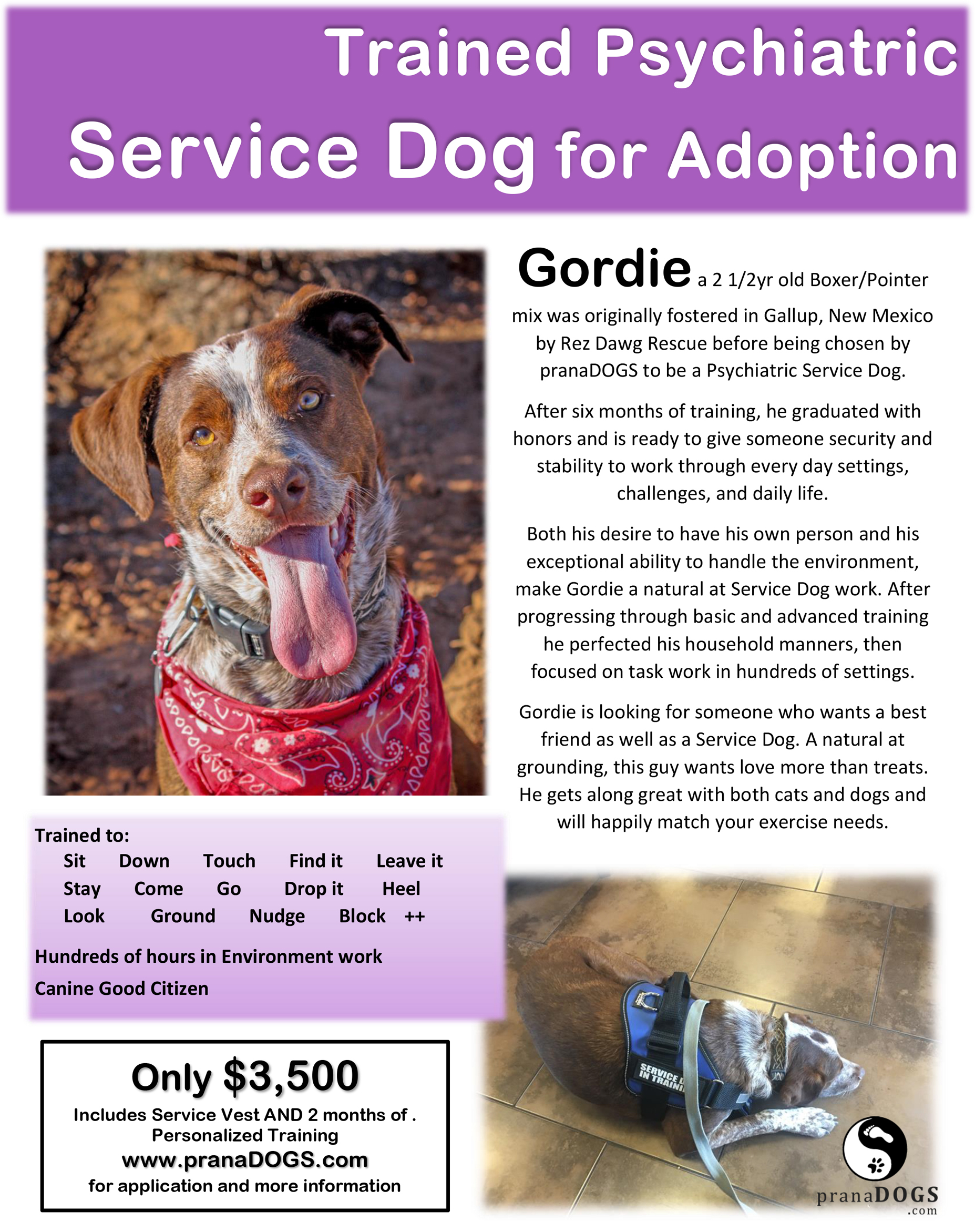 Trained Psychiatric Service Dog for Adoption