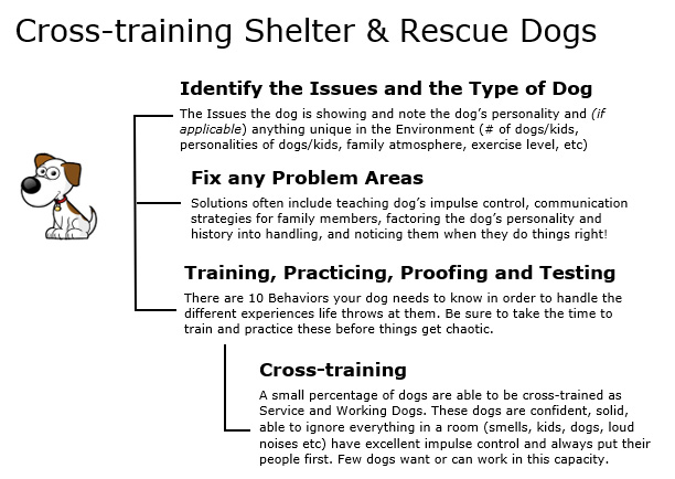 Cross training Shelter and Rescue Dogs